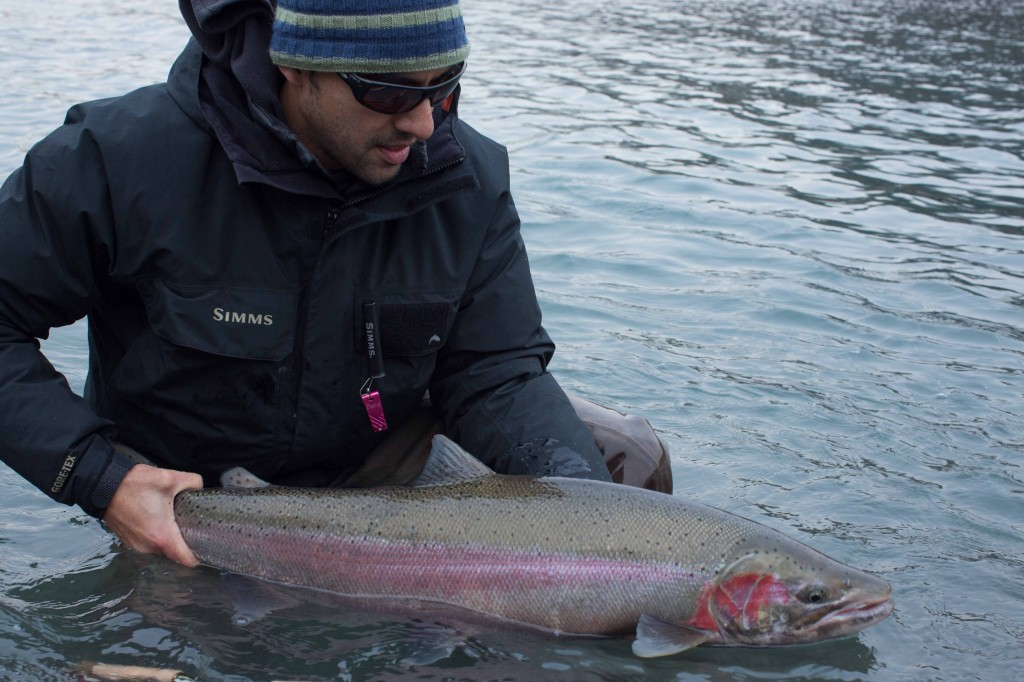 Our December Native steelhead are some of the thickest and toughest you will find anywhere