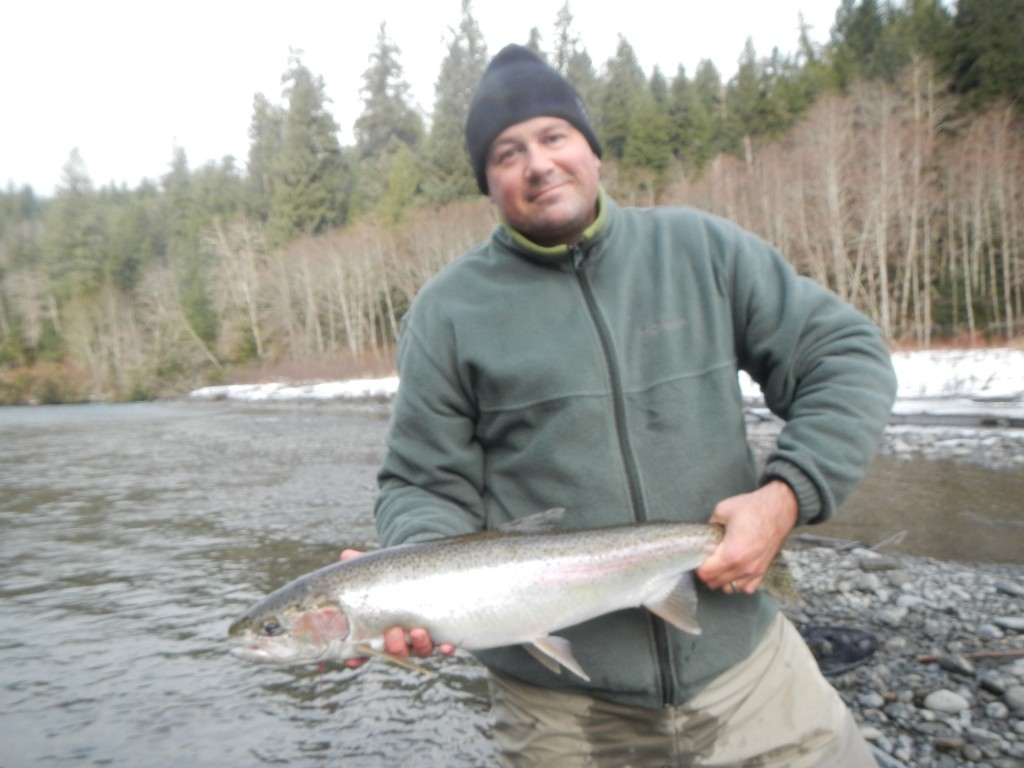 Shad with a sweet hatchery steelhead
