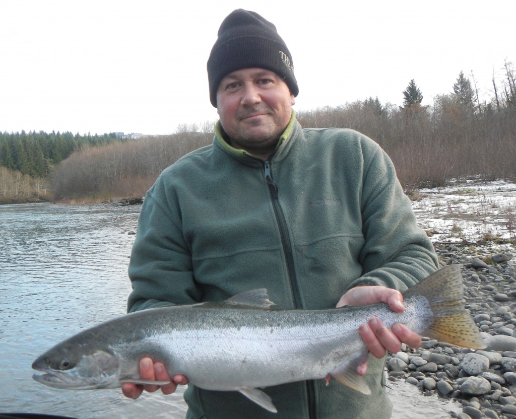 Shad with steelhead