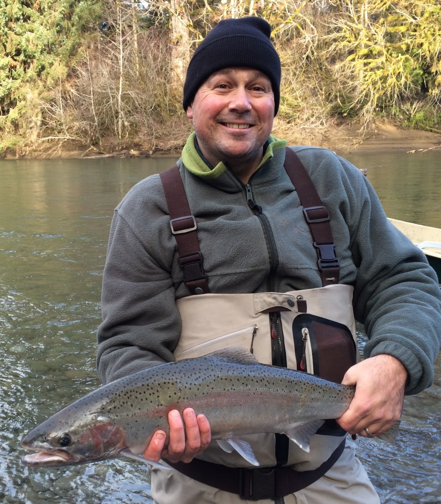Shad with a hatchery steelhead