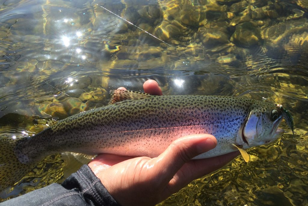 Salmon are super cool, but a quite day of trout fishing is awful nice