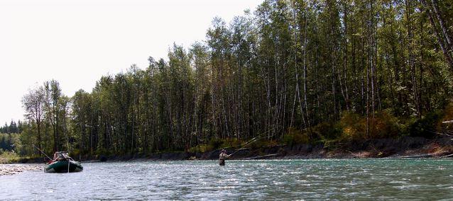 Fall steelhead fishing on the olympic peninsula fishing for Hoh river fishing report